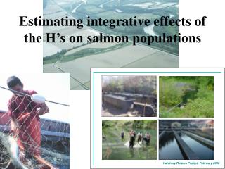 Estimating integrative effects of the H's on salmon populations
