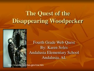 The Quest of the Disappearing Woodpecker