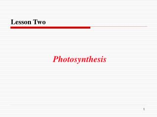 Lesson Two Photosynthesis