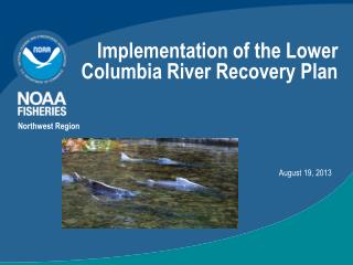 Implementation of the Lower Columbia River Recovery Plan