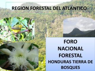 REGION FORESTAL DEL ATLANTICO