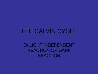 THE CALVIN CYCLE