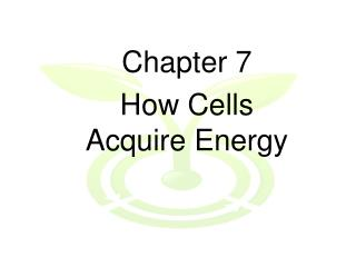 Chapter 7 How Cells Acquire Energy
