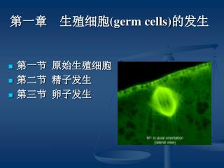 ???    ???? (germ cells) ???