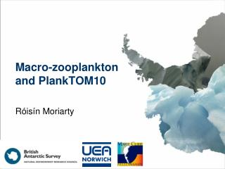 Macro-zooplankton and PlankTOM10