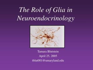 The Role of Glia in Neuroendocrinology