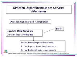 Direction D partementale des Services V t rinaires