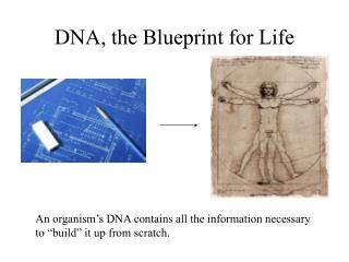 DNA, the Blueprint for Life