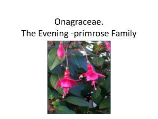 Onagraceae. The Evening -primrose Family