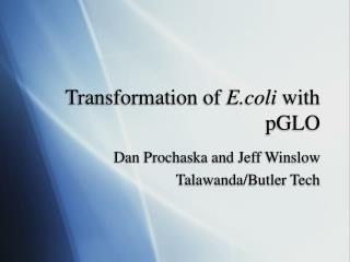 Transformation of  E.coli  with  pGLO