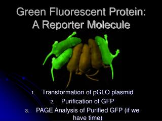 Green Fluorescent Protein:  A Reporter Molecule