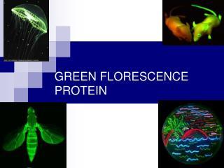 GREEN FLORESCENCE PROTEIN T.A: Riham Baoum