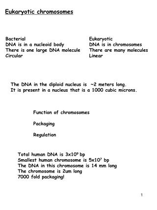Eukaryotic chromosomes