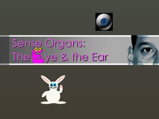 Sense Organs:  The     ye & the Ear