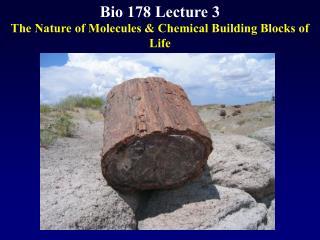 Bio 178 Lecture 3