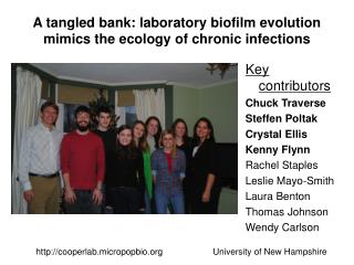 A tangled bank: laboratory biofilm evolution mimics the ecology of chronic infections