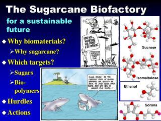 The Sugarcane Biofactory