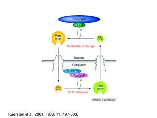 Kuersten et al. 2001, TiCB, 11, 497-503.