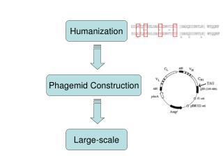Humanization