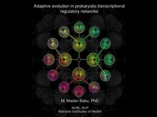 Adaptive evolution in prokaryotic transcriptional regulatory networks
