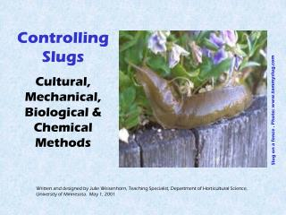 Controlling Slugs  Cultural, Mechanical, Biological & Chemical Methods