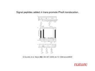 G Gouridis  et al .  Nature 462 ,  363 - 367  (2009) doi:10.1038/nature08 559