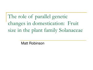 The role of parallel genetic changes in domestication:  Fruit size in the plant family Solanaceae