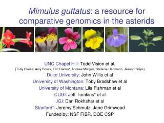 Mimulus guttatus : a resource for comparative genomics in the asterids