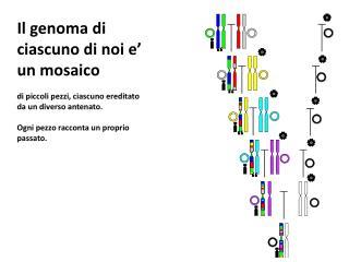 Il genoma di ciascuno di noi e' un mosaico