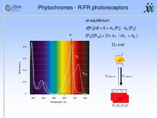 Phytochromes - R/FR photoreceptors