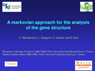A markovian approach for the analysis of the gene structure