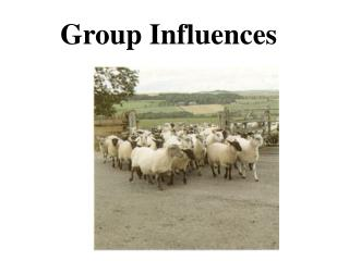 Group Influences