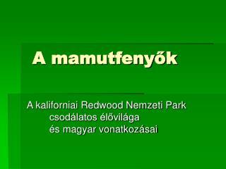 A mamutfenyők