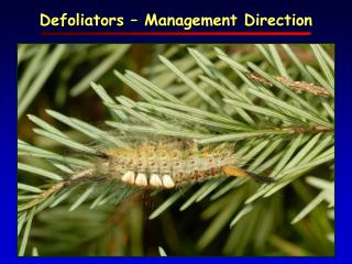 Defoliators – Management Direction