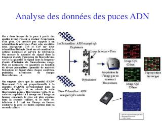 Analyse des donn es des puces ADN