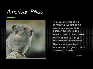 American Pikas