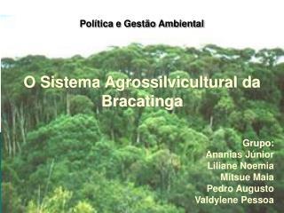 O Sistema Agrossilvicultural da Bracatinga