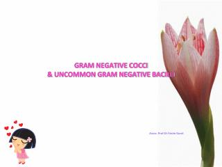 GRAM NEGATIVE COCCI & UNCOMMON GRAM NEGATIVE BACILLI