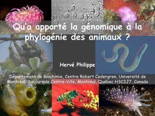 Qu'a apporté la génomique à la phylogénie des animaux ? Hervé Philippe