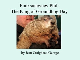 Punxsutawney Phil:   The King of Groundhog Day