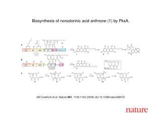 Biosynthesis of norsolorinic acid anthrone (1) by PksA.
