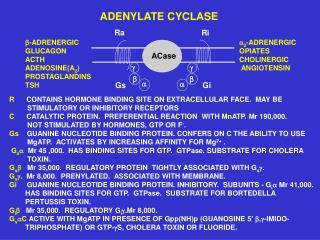 ? -ADRENERGIC                            ? 2 -ADRENERGIC GLUCAGON           OPIATES