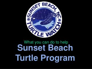 Sunset Beach Turtle Program