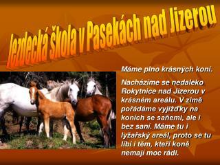 Máme plno krásných koní.