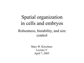 Spatial organization  in cells and embryos