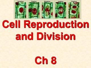 Cell Reproduction and Division Ch 8