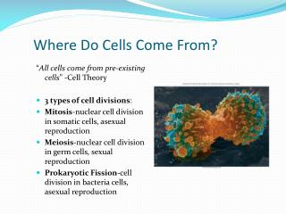 Where Do Cells Come From?