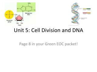 Unit 5: Cell Division and DNA