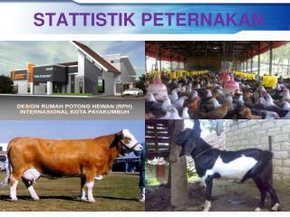 STATTISTIK PETERNAKAN