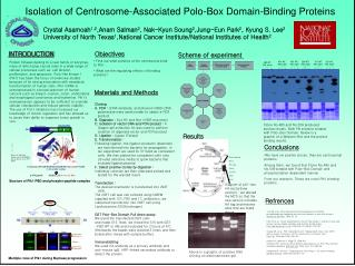 Isolation of Centrosome-Associated Polo-Box Domain-Binding Proteins